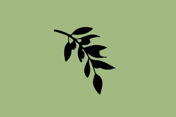 Olive Tree Net